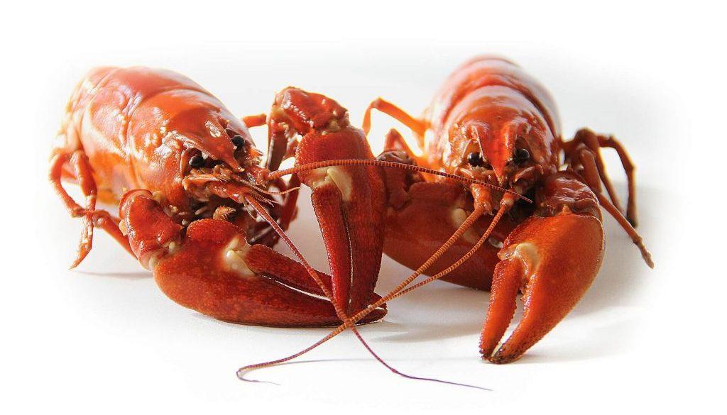 crayfish-423251_1920 (1)